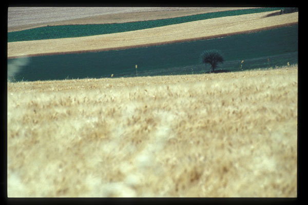 Download Tuscany  (600Wx400H)