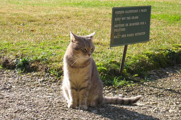 Keep off the Grass! (600Wx400H) - Keep off the Grass! Nice picture of a cat in a public space in Florence (Photo by Sassica Francis-Bruce)