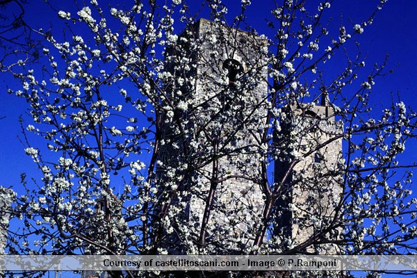 Download S.Gimignano Towers (600Wx400H)