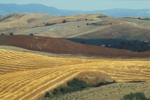 Download Fields of Tuscany (600Wx400H)